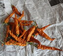 トウガラシ * イエローオレンジ ◆ 唐辛子 鷹の爪 / 北海道産 木の実 クリスマス 花材 素材 ドライフラワー リース インテリア ナチュラル