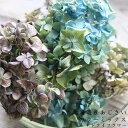 あじさいヘッド(アジサイヘッド)/北海道産ドライフラワー・花材・リース・手作り・国産・材料・素材/ナチュラルイン…