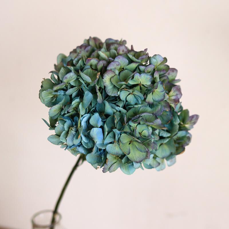 アジサイ枝付 ブルー ・ グリーン 系 M ドライフラワー / 紫陽花 あじさい 花材 ナチュラル インテリア 材料 素材 枝付き