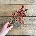 【 赤い実 ドライフラワー 】 野バラの実 ショート ◆ ドライフラワー / 北海道産ドライフラワー 花材 リース 手作り 国産 材料 素材 …