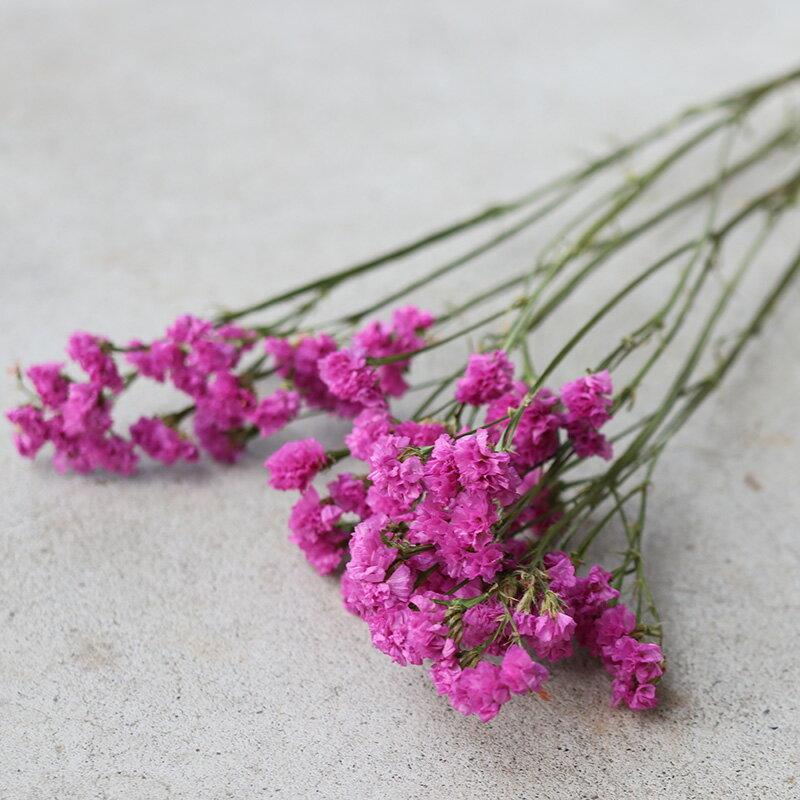 スターチス セイシャルピンク / ドライフラワー 花材 リース 手作り 国産 材料 素材 ナチュラル インテリア