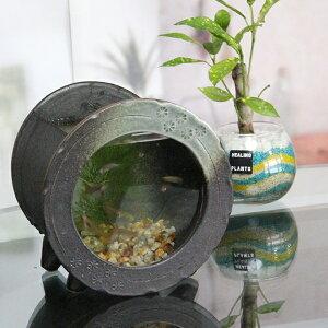 信楽焼 和風 おしゃれ 水槽 陶器水槽 陶器とガラスがコラボ インテリア水槽 金魚鉢 メダカ鉢 陶器 水鉢 めだか鉢 金魚鉢 鉢 はす鉢 睡蓮鉢 su-0210