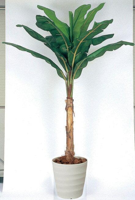 【送料無料♪】バナナ (人工観葉植物) 高さ200cm 光触媒 (135B500) 【人工観葉植物・造花・フェイクグリーン/フロア(鉢型)用 人工観葉植物(光触媒 )】