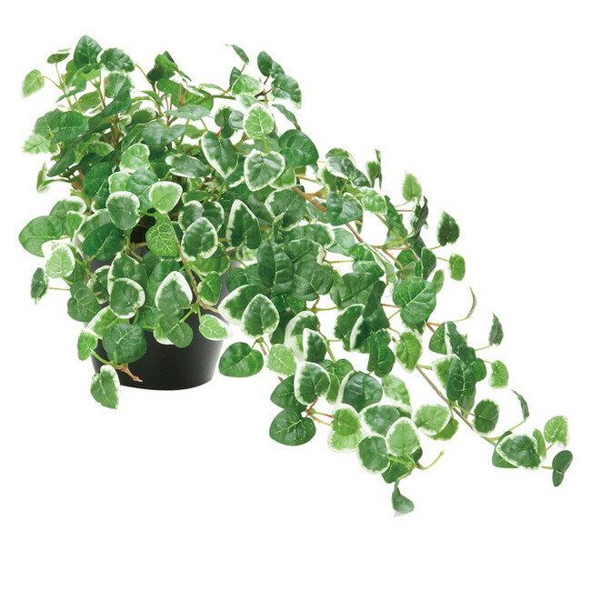 ミムラ (人工観葉植物) 高さ25cm 光触媒 (店舗用品/光触媒 人工観葉植物・造花・フェイクグリーン/テーブル(卓上)用)