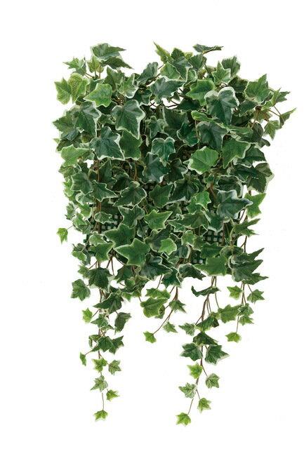 壁面緑化斑入アイビー (壁掛け/壁面用人工観葉植物) 高さ65cm 光触媒 (441A68)(店舗用品/光触媒 人工観葉植物・造花・フェイクグリーン/壁掛け/壁面用)