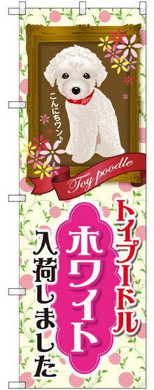 のぼり旗 トイプードル ホワイト 入荷 (GNB-2465) ペットショップ/動物病院の販促・PRにのぼり旗 (ペットショップ/犬・猫・小動物)
