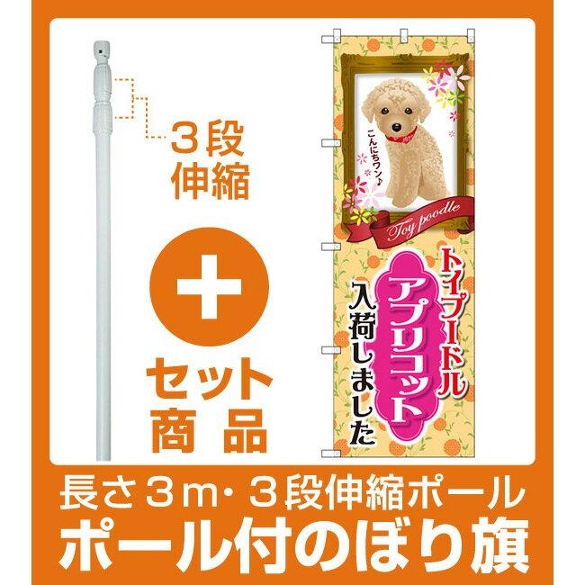 【セット商品】3m・3段伸縮のぼりポール(竿)付 のぼり旗 トイプードル アプリコット 入荷 (GNB-2455)(業種別/ペットショップ/犬・猫・小動物)