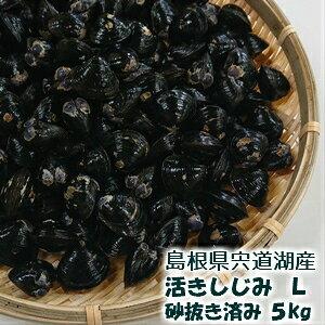 島根県 宍道湖産 活きしじみ (砂抜き済み) Lサイズ 5Kg