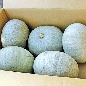 【送料無料】【産直同梱不可】【10月上旬〜1月下旬】北海道産 雪化粧かぼちゃ(ゆきげしょうカボチャ)10kg(4〜7玉)×1箱