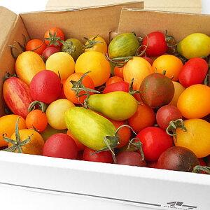 カラフルミニトマト 1Kg (約10種類・70〜80粒程度)北海道剣淵産出荷期間 7月下旬〜9月下旬