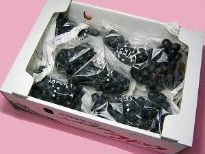 北海道産黒葡萄(ぶどう) キャンベル 4kg(10房程度)送料無料 生産元直送出荷期間 9月下旬〜10月上旬