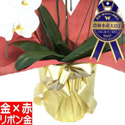 【金赤ラッピング&金リボン】(単品での販売は出来ません)