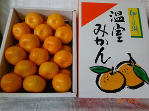 愛知県産 伊良湖ハウスみかん2.5kg 化粧箱入り御中元、お盆お供え、手土産 好適品! 熨斗、簡易包装対応します