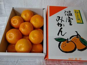 愛知県産 伊良湖ハウスみかん1.25kg 化粧箱入り御中元、お盆お供え、手土産 好適品! 熨斗、簡易包装対応します