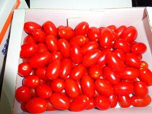豊橋産 高糖度フルーツミニトマト あまえぎみクレア(赤)1kg送料無料(ただし、北海道は800円、沖縄は1000円、クールは300円、別途送料がかかります。)