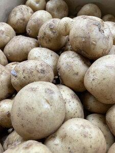 北海道産他  訳あり ジャガイモ(大きさおまかせ)約3kg送料無料(ただし、北海道は1000円、沖縄は1500円、別途送料がかかります