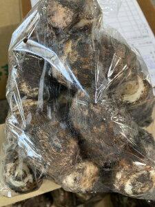 愛知産 奥三河 ねばり里芋 1kg送料無料(北海道は1000円、沖縄は1500円別途申し受けます)