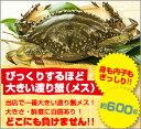 カニ!超新鮮!獲れたての活き締めワタリガニ(メス)超特大1尾(600g以上)びっくりするほど大きいサイズ!どこにも負け…