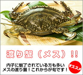 カニ超新鮮!獲れたての活き締めワタリガニ(メス)1尾(約300g)