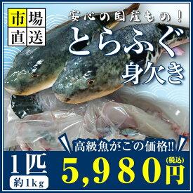 トラフグ とらふぐ 河豚 ふく 身欠き みがき 約900〜1kg
