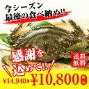 カニ!超新鮮!獲れたての活き締めワタリガニ(メス)特大1尾(約400g)3尾入びっくりするほど大きいサイズ!