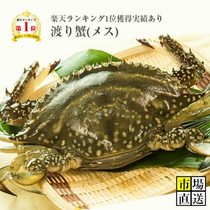 カニ!超新鮮!獲れたての活き締めワタリガニ(メス)特大1尾(約450g)びっくりするほど大きいサイズ!