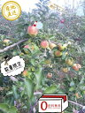 700円値下げ葉とらず樹上完熟【りんご】濃厚な甘さの《ぐんま名月》4.5キロ【訳あり家庭用】【送料無料】