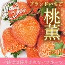 【送料無料】静岡産 ブランドいちご 希少品種「桃薫」 贈答用大粒いちご 1パック(15〜20粒、約350g)