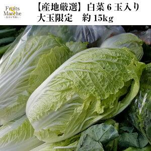 【送料無料】【産地厳選】白菜 6玉入り 大玉 約15kg(北海道沖縄別途送料加算)