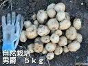 じゃがいも 男爵 5kg S〜Lサイズ混合 木村秋則式自然栽培 自然栽培 無農薬 無肥料 自然農法 オーガニック 有機JAS 青…