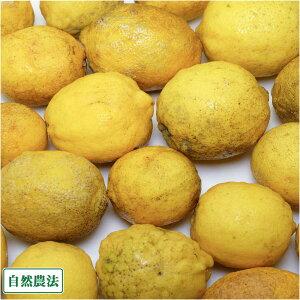 【加工用】 レモン 10kg 自然農法 (広島県 道谷農園) 産地直送