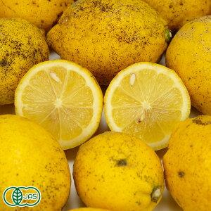 【加工用】有機レモン 10kg 有機JAS (佐賀県 佐藤農場株式会社) 産地直送