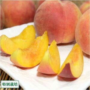 【クール便】桃 黄金桃 6kg 特別栽培 (山形県 森谷果樹園) 産地直送