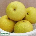 ゴールド20世紀梨 6kg 特別栽培 (長野県 さんさんファーム) 産地直送