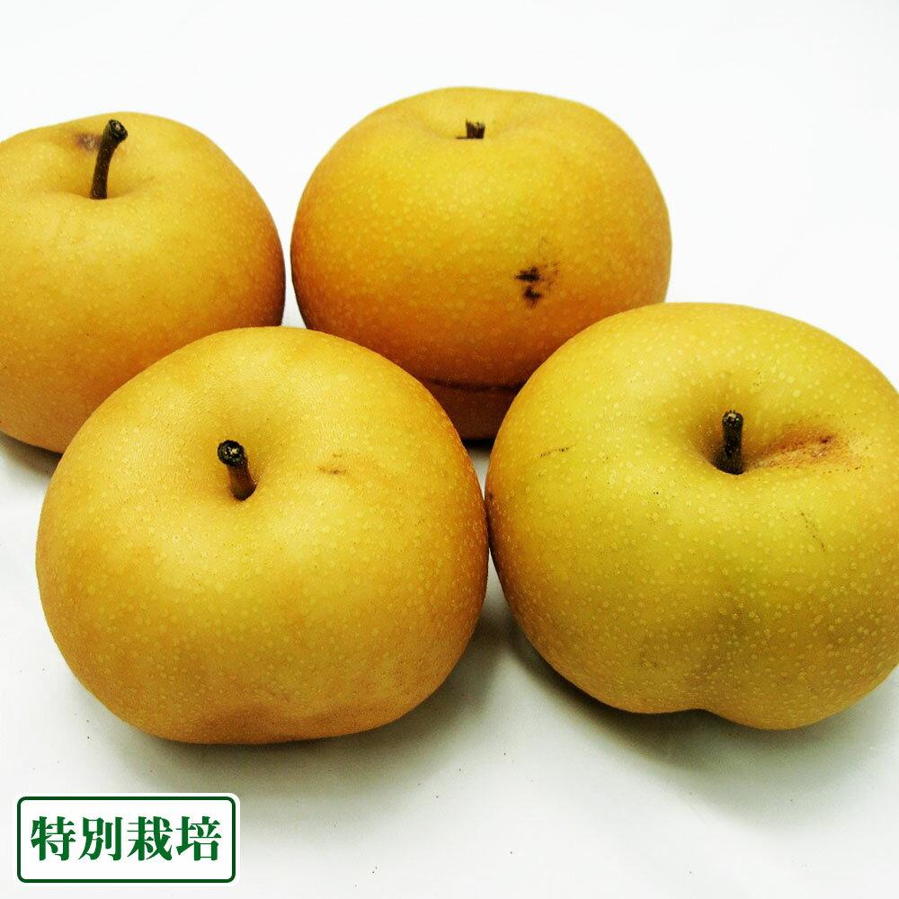 【B品】南水 3kg 特別栽培 (長野県 さんさんファーム) 産地直送