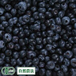 【加工用・クール便】 生ブルーベリー 1kg 自然農法 (青森県 根岸FARM) 産地直送