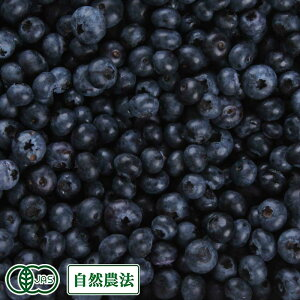 【加工用・クール便】 生ブルーベリー 2kg 自然農法 (青森県 根岸FARM) 産地直送
