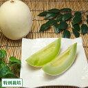 ビレンスメロン 4〜6玉(約4kg)(長崎県 長有研) 特別栽培 減農薬 フルーツ 無化学肥料 送料無料 産地直送