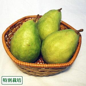 ル・レクチェ 約3kg(6〜9玉) 特別栽培 (長野県 さんさんファーム) 産地直送