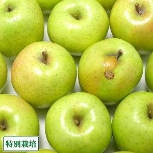 【訳あり】王林 5kg箱 特別栽培 りんご (青森県 さいとうりんご園) 産地直送
