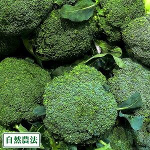 ブロッコリー 約6kg 自然農法 (沖縄県 大宜味農場) 産地直送
