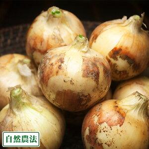 新玉ねぎ 約5kg M〜Lサイズ 自然農法 (沖縄県 大宜味農場) 産地直送