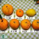 【A・B品混合】 晩柑セット(3〜4種) 5kg 有機JAS (広島県 瀬戸内海の恵み普及会) 産地直送