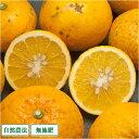 [ポイント10倍] 甘夏 B品 5kg (愛媛県 風車の街佐田岬の会) 自然栽培 無農薬 無肥料 みかん 訳あり 柑橘