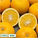 [感謝セール] 甘夏 A品 5kg (愛媛県 風車の街佐田岬の会) 自然栽培 無農薬 無肥料 夏みかん 柑橘
