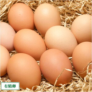 有精卵 40個箱詰め(北海道 卵ラン農場ムラタ)健康有精卵・送料無料・産地直送
