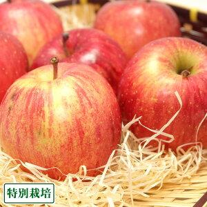 【訳あり】ふじ 5kg箱 特別栽培 (青森県 田村りんご農園) 産地直送 りんご