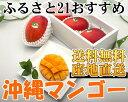 ふるさと21おすすめ沖縄マンゴー(自然農法無農薬アーウィン) 家庭用 1kg (2〜4玉)化粧箱入り・送料無料・産地直送・アップルマンゴー