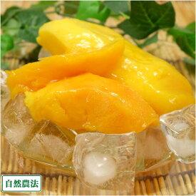 冷凍マンゴー(アーウィン) 2kg 自然農法 (沖縄県 沖縄マンゴー生産研究会) アップルマンゴー