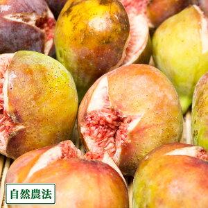 【予約商品・クール便】イチジク蓬莱柿 300g×8パック 自然農法 (広島県 万汐農園) 産地直送